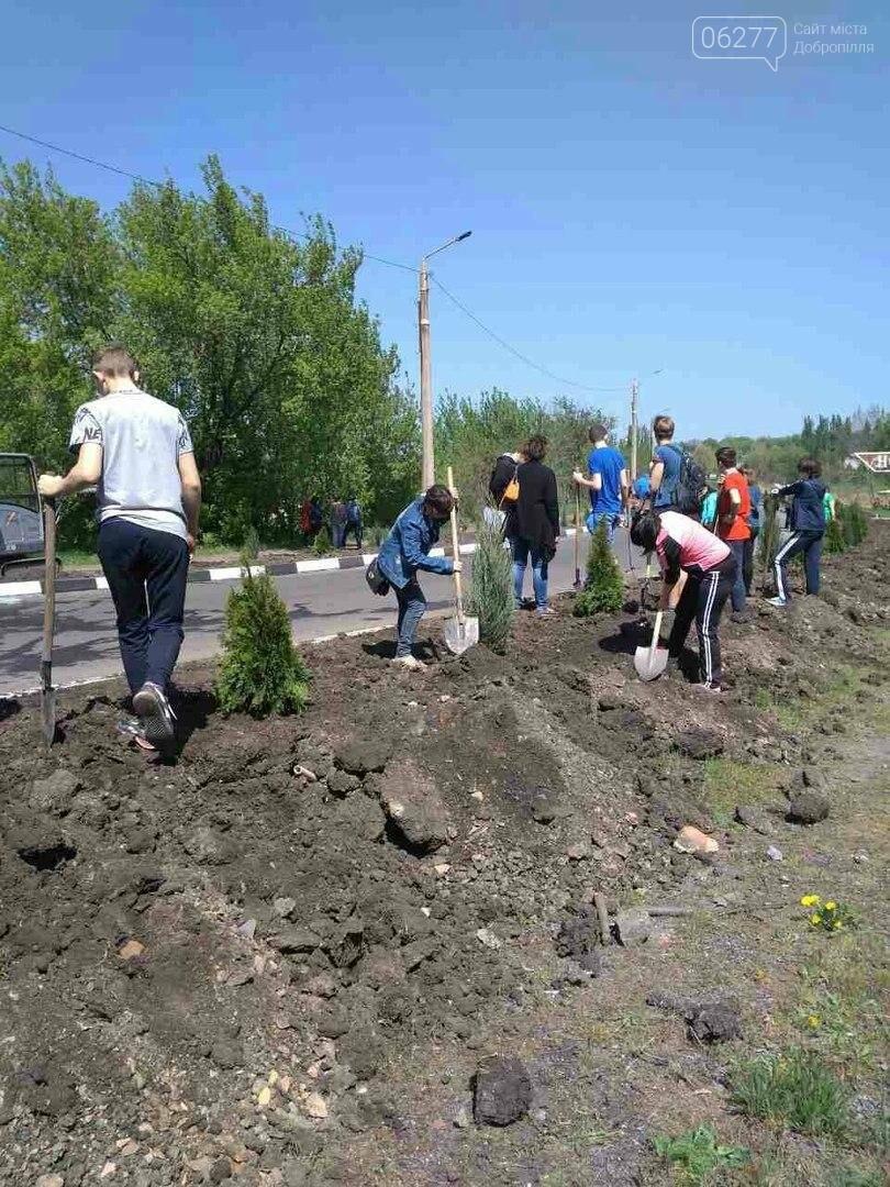 Въезд в Новодонецкое украсили вечнозеленой аллеей, фото-6