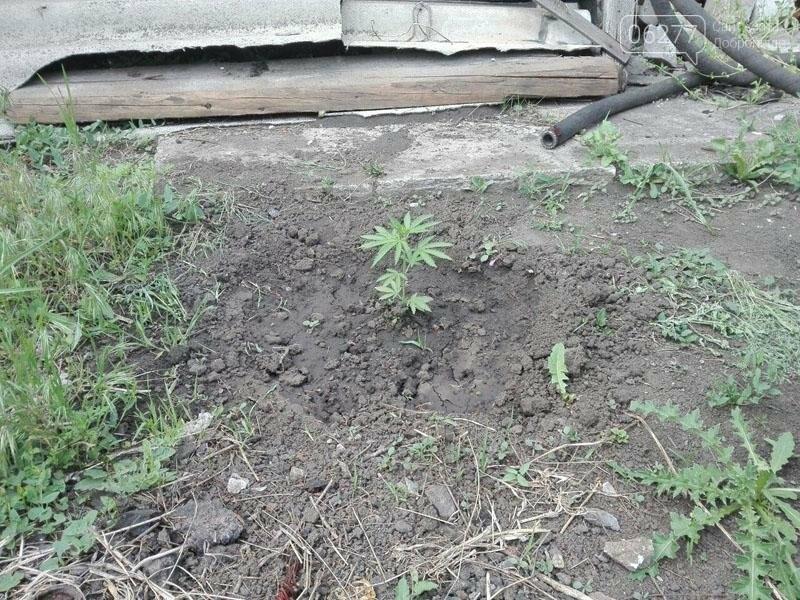 """В Доброполье задержали """"садовода-любителя"""" за выращивание конопли, фото-1"""