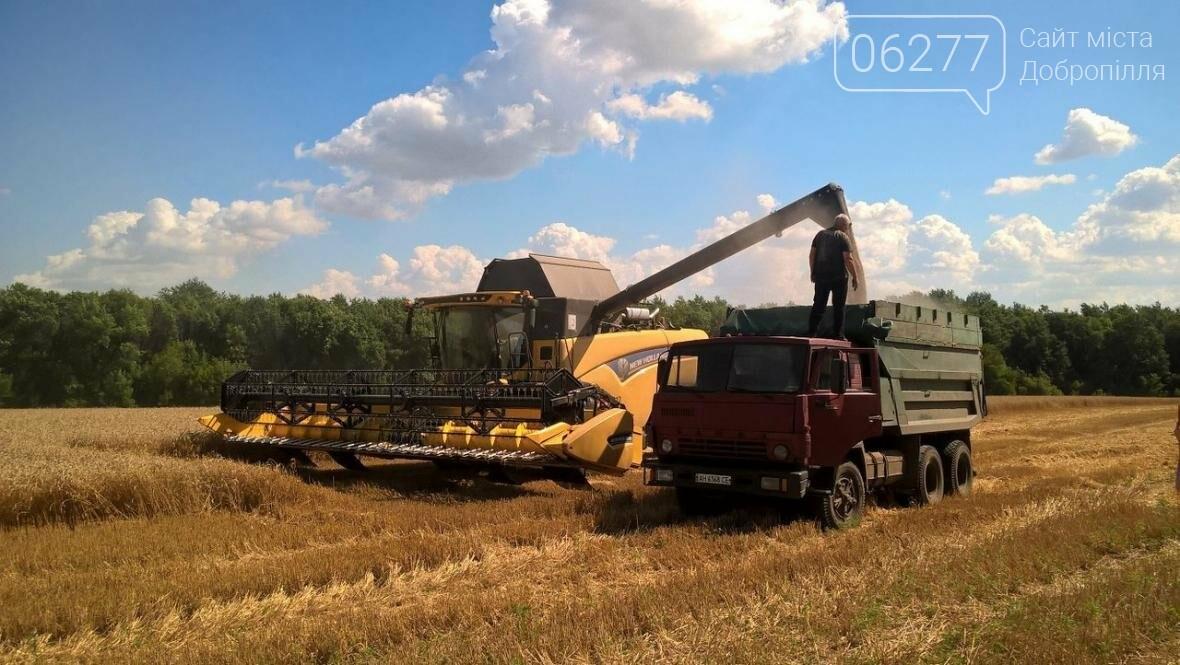"""ООО """"Перспектива"""" подвела итоги первого месяца уборки урожая зерновых, фото-1"""