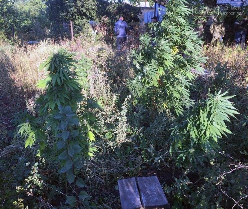 Добропольские правоохранители разоблачили двоих «нарколюбителей» и «наркоагрария» , фото-3