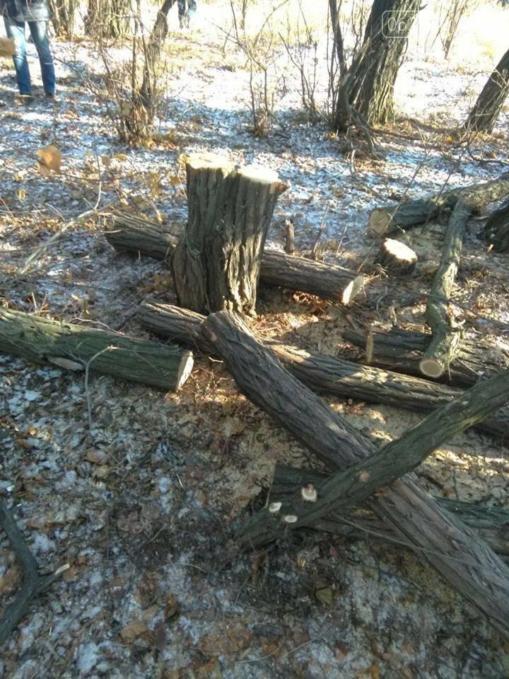 У Добропільському районі лісосмуги вирубують не бандити, а люди, яким нічим топити піч, фото-3