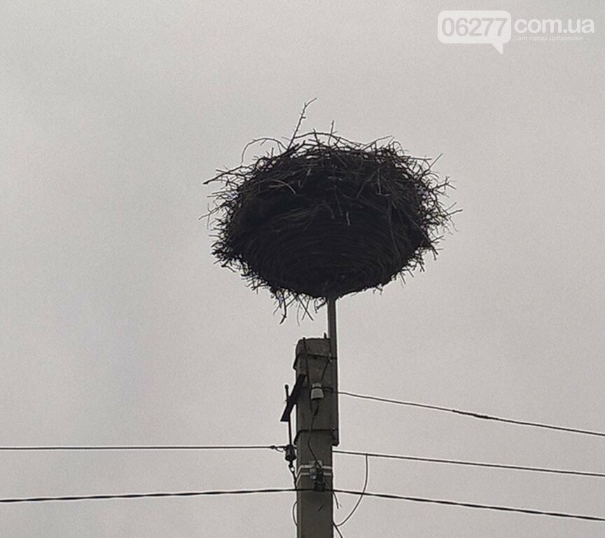 ДТЭК Донецкие электросети построили «новый дом» для белых аистов в Покровском районе, фото-4