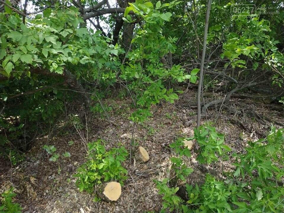 За фактом вирубки лісу у с.Вільне Добропільського району відкрито кримінальне провадження, фото-1