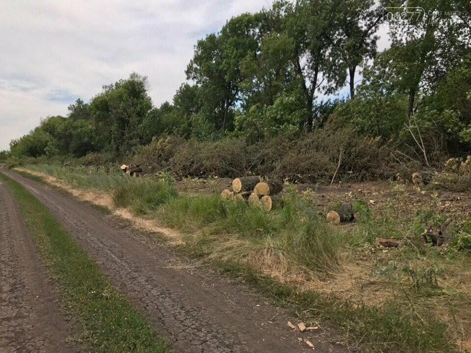 За фактом вирубки лісу у с.Вільне Добропільського району відкрито кримінальне провадження, фото-3