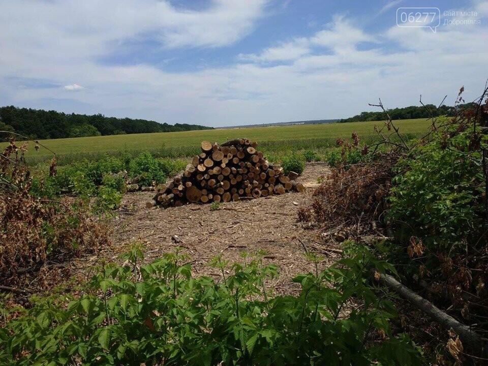 За фактом вирубки лісу у с.Вільне Добропільського району відкрито кримінальне провадження, фото-4
